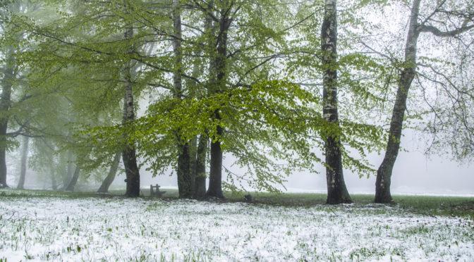 Májusi havazás a Mátrában