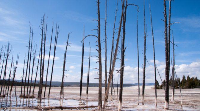 Politikai eszköz-e az erdőtűz?
