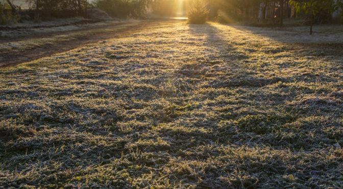 Az első igazi fagy, kerti finomságaink halála