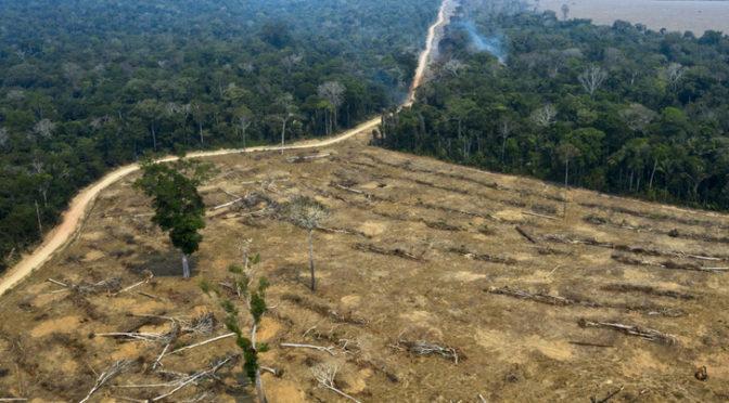 Nyolcvanöt százalékkal nőtt az erdőirtás az Amazonas-medence brazil szakaszán