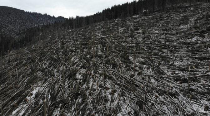 Legalább egymillió köbméter fát döntött ki a szél Hargita és Maros megyében