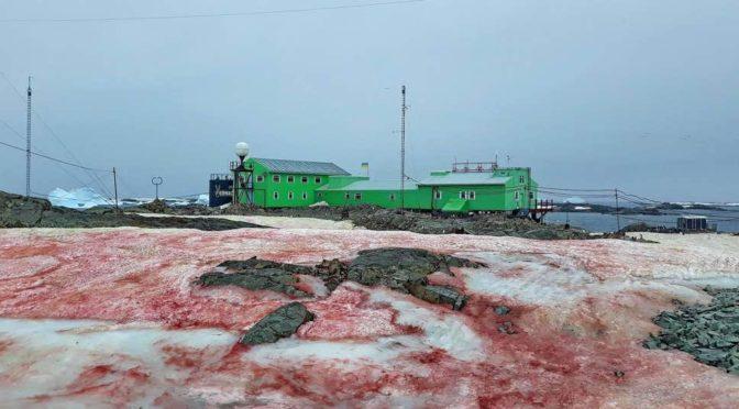 Vörös a hó az Antarktiszon – de nem azért, amiért gondolnánk