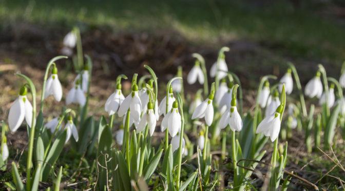 Kopogtat a tavasz, korai még!