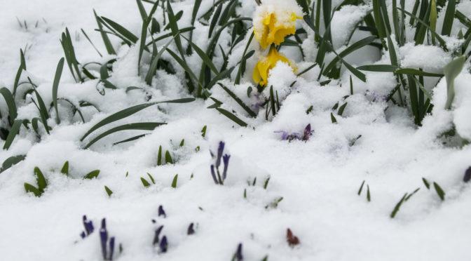 Tél, a tavaszban