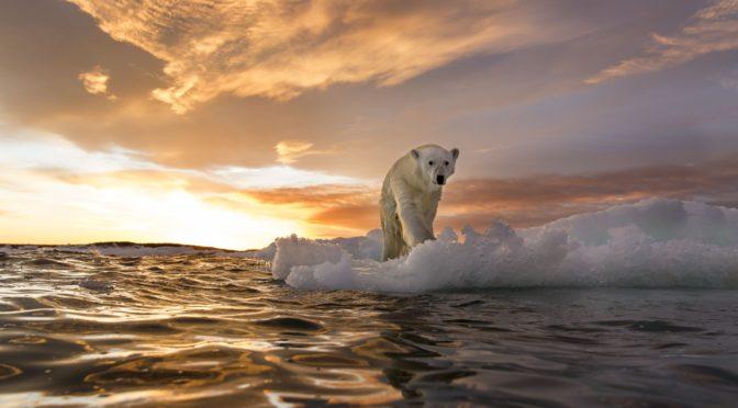 Egyre hosszabbak és melegebbek az óceánok hőhullámai