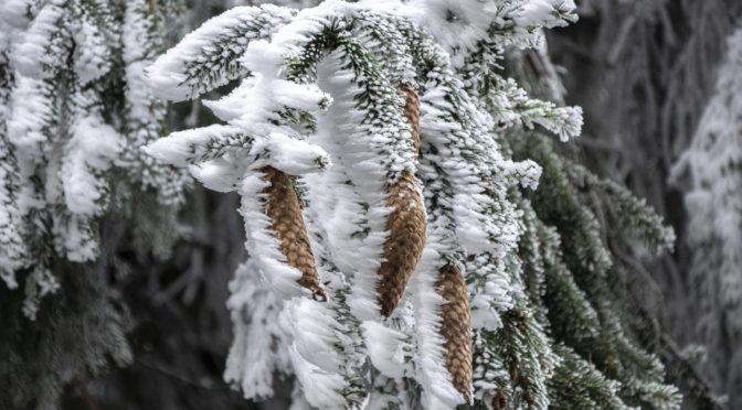 Pár napig még megcsodálhatjuk a zúzmarával borított hegyivdéki erdőket, aztán erőteljes melegedés veszi kezdetét